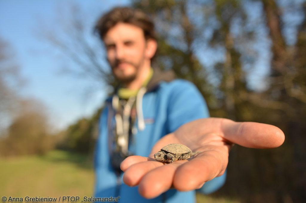 Borys Kala z młodym żółwiem błotnym. fot. Anna Grabieniow