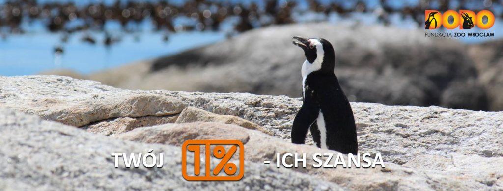 Podaruj 1% swojego podatku na ochronę pingwinów przylądkowych!