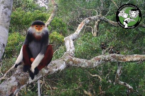 Duk wspaniały siedzi na drzewie w dżungli w Laosie - Wild Run. fot. Association Anoulak