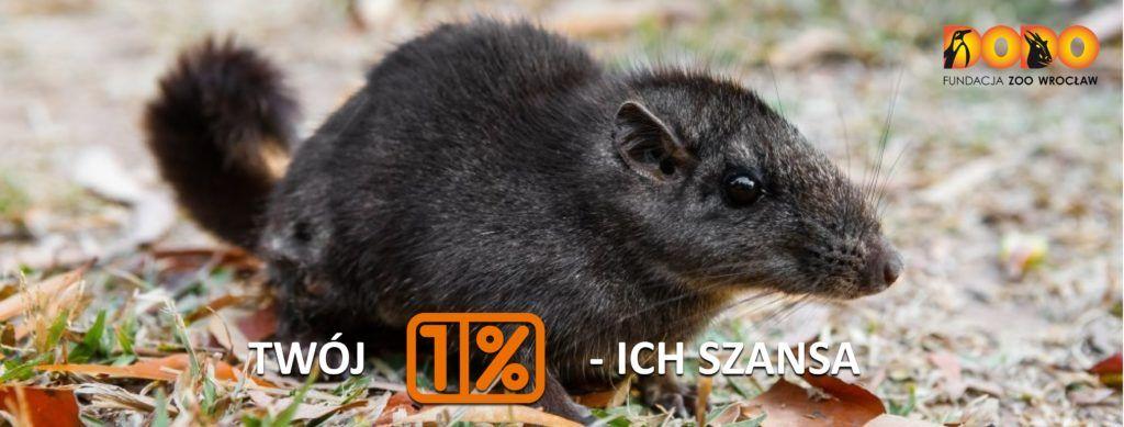 Podaruj 1% swojego podatku na ochronę laotańskiego szczura skalnego!