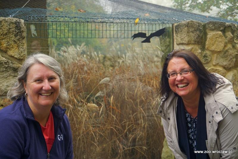Koordynatorka hodowli fenków w Europie Anna Mękarska i Karen Bauman, koordynatorka hodowli fenków w Stanach Zjednoczonych przy wybiego fenków w Zoo Wrocław
