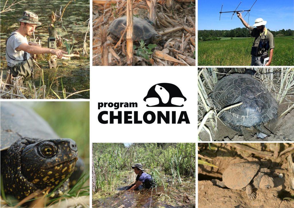Kolaż zdjęć z Programu Chelonia PTOP Salamandra