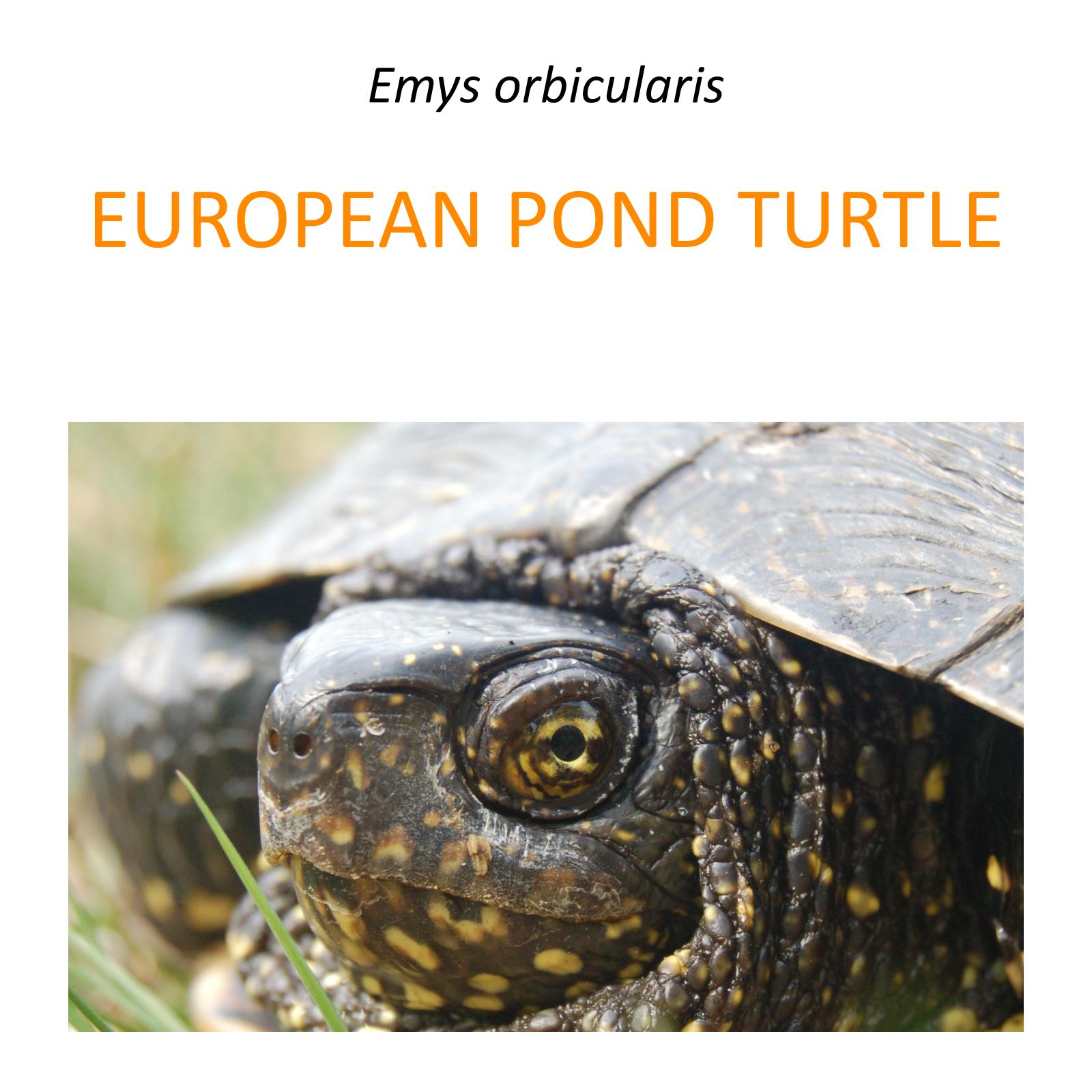 European pond turtle conservation pro