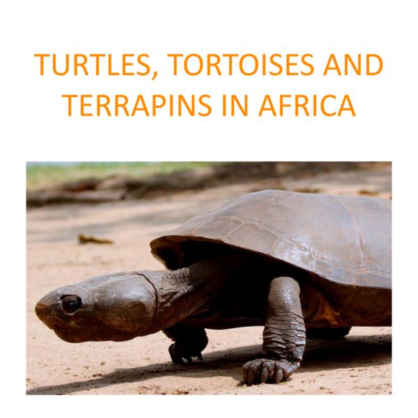 Turtles, tortoises and terrapins