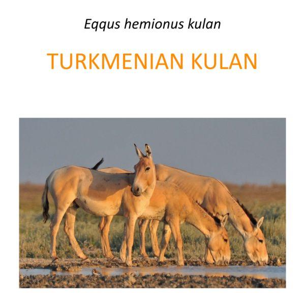 Turkmenian kulan translocation project in Kazahstan