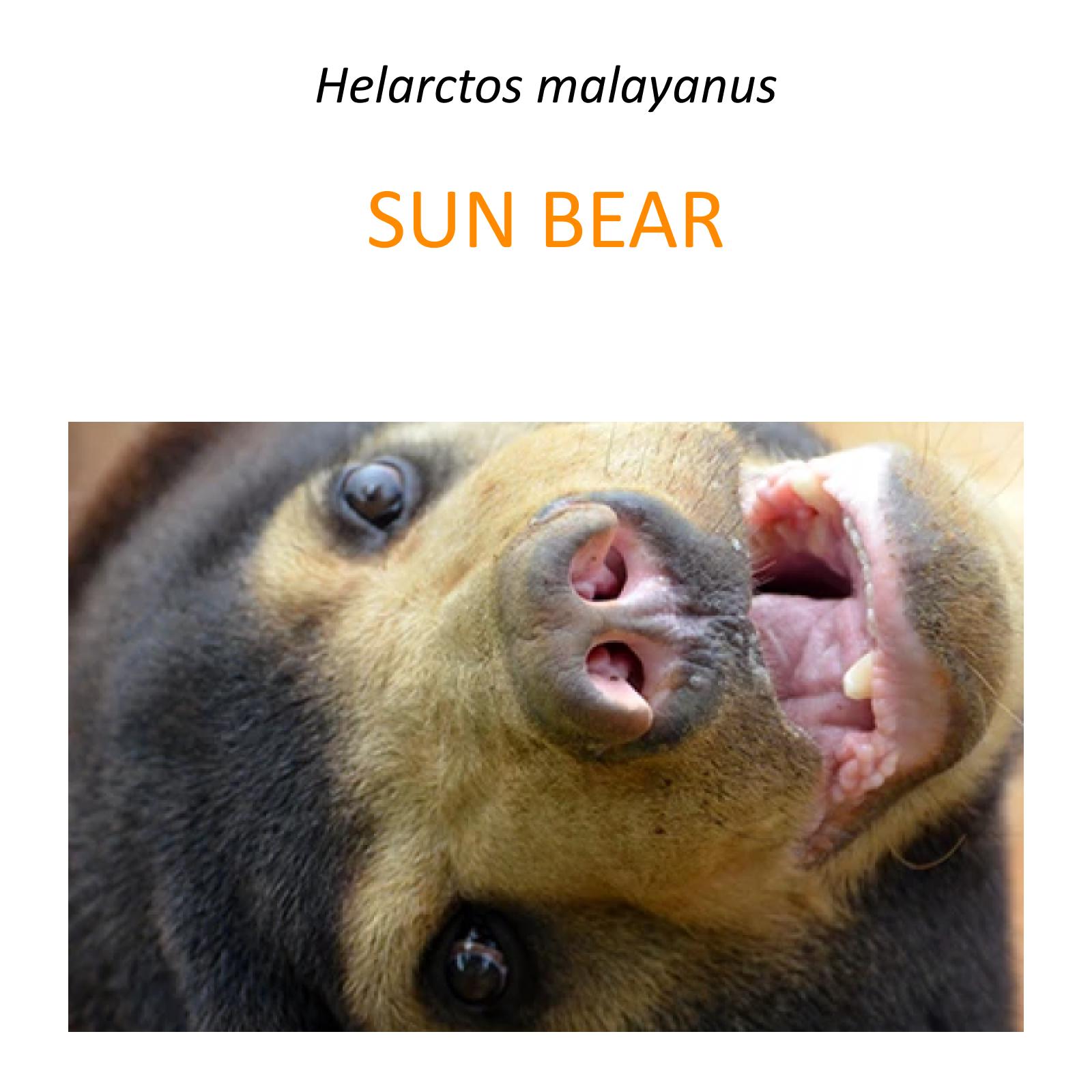 Sun bear rescue program
