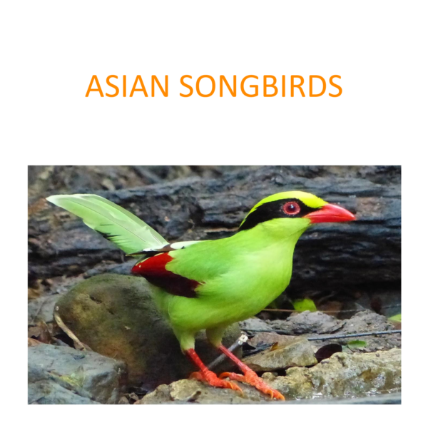 Asian songbirds conservation project