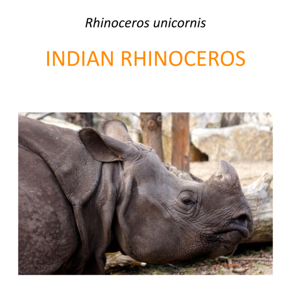 Indian rhino conservation program