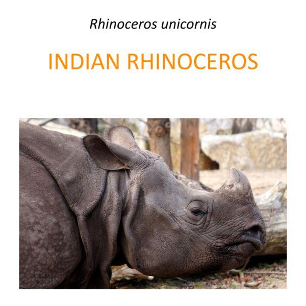 Indian rhino conservation program