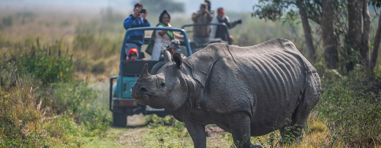 Nosorożec indyjski i turyści w Parku Narodowym Kaziranga w Indiach. fot. WWF