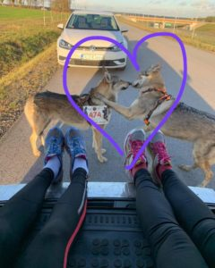 Wilczaki biegną w Wild Run 2020