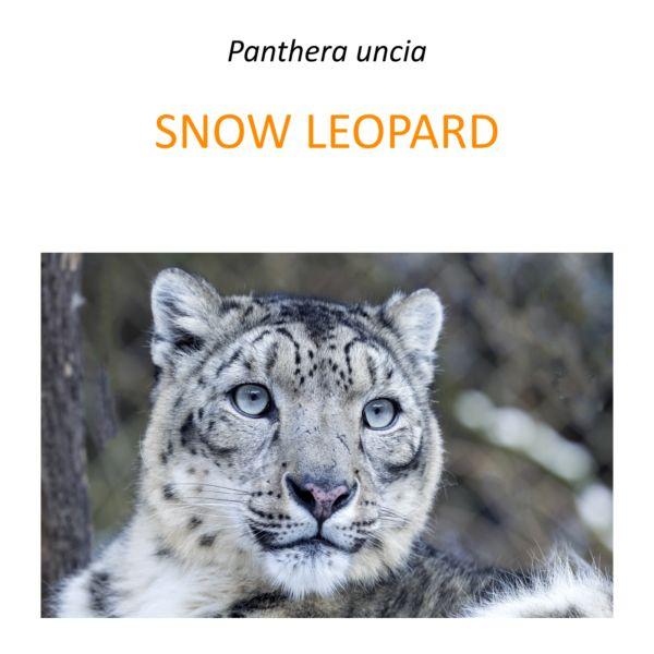Snow leopard conservation program