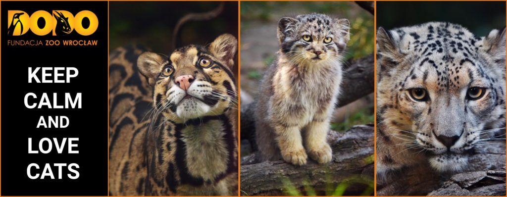 Ratujmy dzikie koty