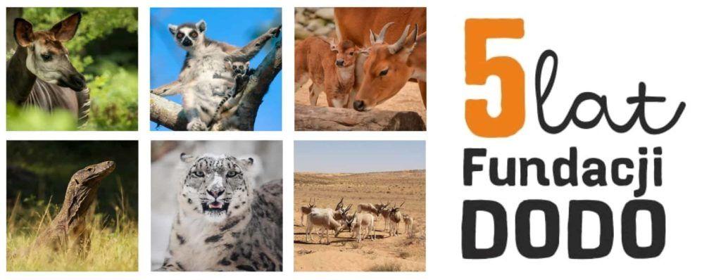 5 lat Fundacji Dodo